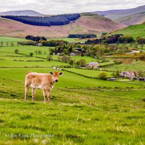 Ingram, Breamish Valley Northumberland, by Ian Cook