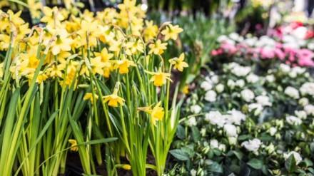 Spring Flowers by Chris Payne