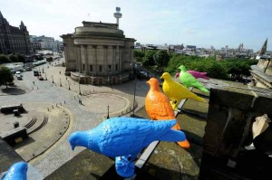 liverpool-biennial-coloured-pigeons-on-the-walker-art-gallery-rooftop-5945686331