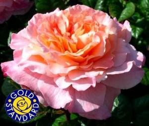 The Rachel Rose