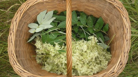 meadowsweet basket