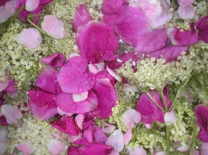 Elderflowers and Rose petals