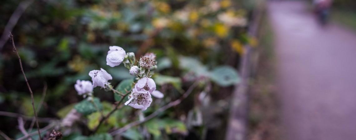 Wild blooms by Chris Payne