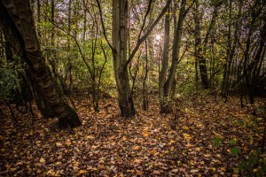 Autumn woodland by Chris Payne