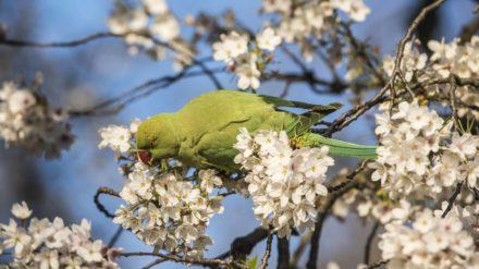 Bird in Heaton Park, Chris Payne