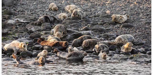 Photo Gallery: Farne Islands, Northumberland