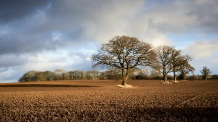 Fields at Easingwold by Paul Hunter