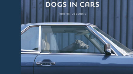 Dogs in Cars_Case