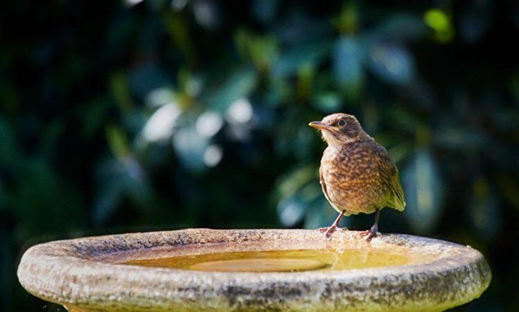 Yorkshire bird by Paul Hunter