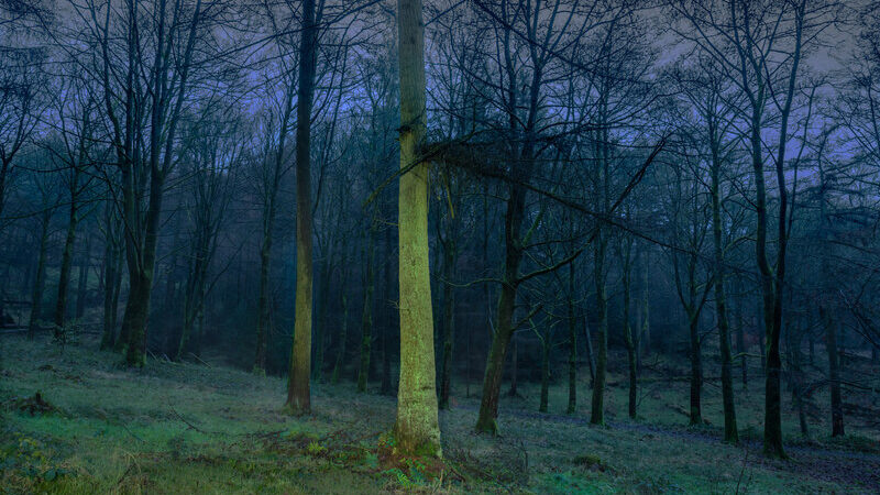 Macclesfield forest, Simon Buckley
