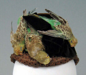 Examples of bird hats, or 'murderous millinery', Aurum publishers