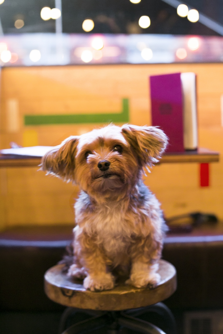 Northern soul pub dogs of manchester - Imperial westies ...