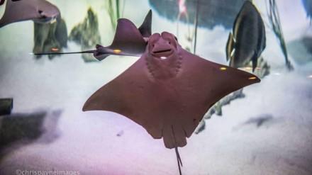 Sea Life by Chris Payne