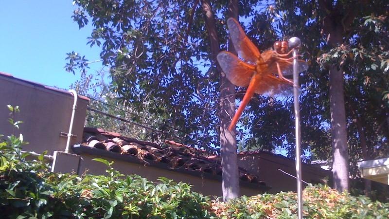 Red Dragonfly on Lynne Bateson's car aerial