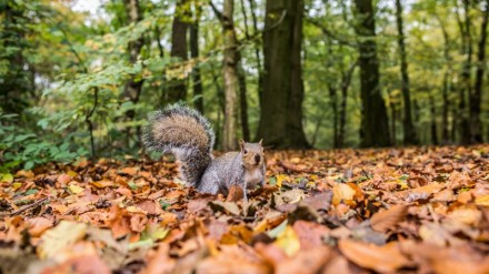 Squirrel at Heaton Park, Manchester
