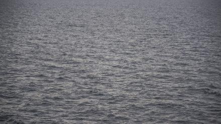 Orca trip by Chris Payne
