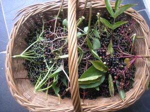 elderberry basket