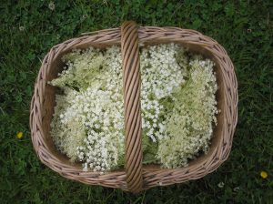 elderflower basket