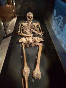 Jorvik Viking Womans Skeleton