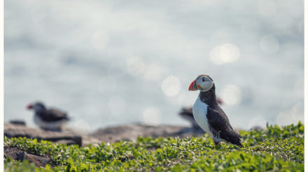 Farne Islands by Phil Pounder