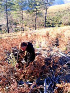 ReForestationAction