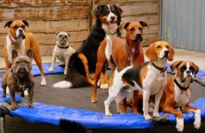 Swinton Doggy Day Care Centre