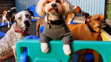 Swinton Doggy Day Care Centre