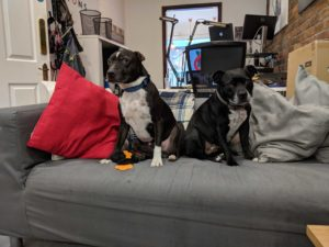 There Be Giants office dogs
