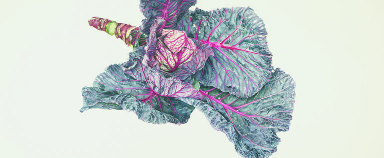 Photo Gallery: RHS Botanical Illustration, The Gold Medal Winners by Charlotte Brooks